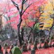五百羅漢の紅葉