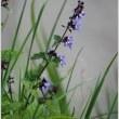 足柄城址公園の野の花たち
