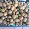 キウイフルーツを収穫したYO(第二弾)