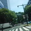 仙台市内けやき
