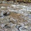 春の渓流2