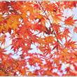 「自宅の紅葉 」   (1の1)  ★ 2017.12.18. ★