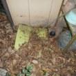 漏水個所が分からない時の調査方法