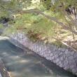 京都の旅10(13日)哲学の道