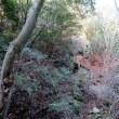 団九郎の岩場