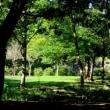 ふれあいの森・泉の森