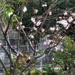 十月桜🌸🌸🌸