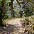 八重桜から石楠花へ:雨引観音