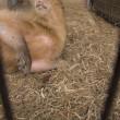 ☆かわいいマロン〜埼玉県こども動物自然公園〜