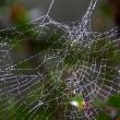 クモの糸に滴