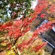【水郡線沿線と北茨城の紅葉を見る(2017年)の巻4】