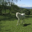 白い馬と白い犬