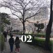 桜の季節の目黒川、噂には聞いていたけど、やっぱりきれいね。