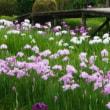 🎵 滝谷菖蒲園には、 学友・病友との忘れ難い思い出がいっぱい!