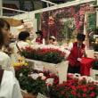 国際バラとガーデニングショウ 1
