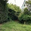 アジサイの季節 武蔵川公園ドッグランの草刈りについて