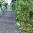 昼食後の雨の降る坂道散歩