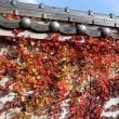 日本瓦に紅葉は良く似合う