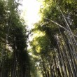 京都@嵐山・渡月橋・竹林