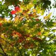 初秋、念願の足尾銅山へ...