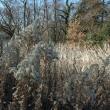 「冬の森探検」事前調査