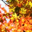 紅葉点景:秋燦