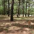 赤松林散歩 180527