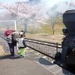 2017.04.16_雑草・野草散策