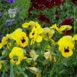 公園での初夏の花々