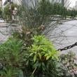 ●9/12 環境の緑化と美化報告 雨なのに参加ありがとうございます