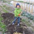 ブロッコリーに追肥・土寄せしました。