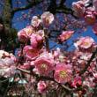 春を堪能。