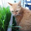 ねこ草ランドも良い季節♪