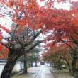 雨の中の紅葉★