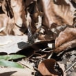 ミツボシツチカメムシ