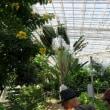 神代植物園  (bon)