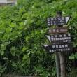 小田急のんびりハイク「秦野駅から弘法山」