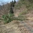 雪による倒木と道