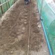 やっとジャガイモを植えつけました (^.^)/~~~