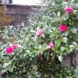 12月16日の花