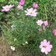 2017/11月『港の見える丘公園』の 花だより〜♪-2