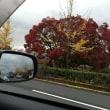 京都のくらし 紅葉みごろ