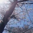 春色(^^♪