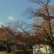 郡山公会堂の紅葉