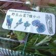 国友農園の 野生山菜天ぷらセット ~4月のみ