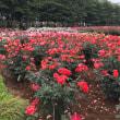 与野バラ祭り!