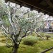 1316 「初冬の大覚寺、静寂の御殿」
