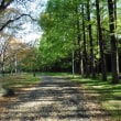 森のような公園散歩
