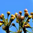 桃の花・梨の花が開花