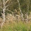 花咲く秋の草原